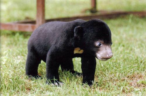 Kleiner Bär ganz groß