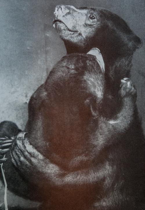 Adam im Arm von Tschita